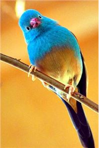 Singing Birds Live Wallapaper image